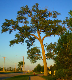 The Imperfect Perfect Tree