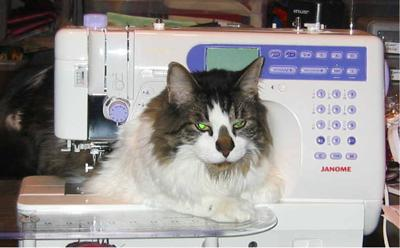 Elvis decides to take over the sewing machine